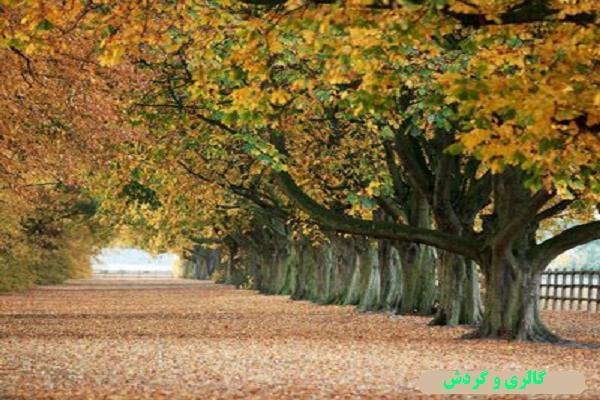 فصل پاییز و منظرههای زیباش در پیش است